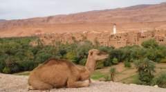 Attraktionen Sehenswürdigkeiten Ausflugsziele in Marokko