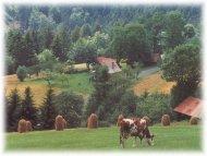 Tschechien Walachei Landschaft Sehenswertes Informationen